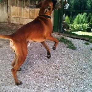 glückshund2