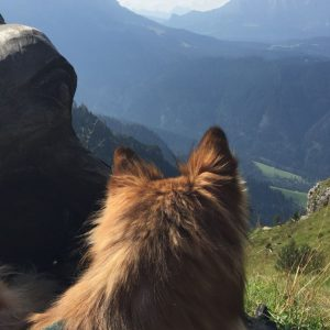 glückshund3