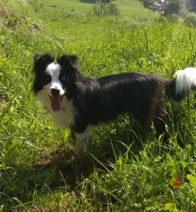 hundepension-suedtirol-hunde-1